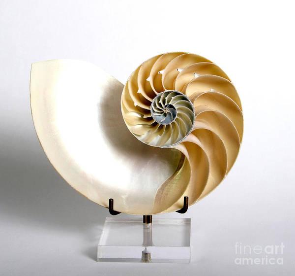 Photograph - Nautilus by Photo Researchers, Inc.