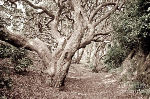 Pohutukawa Photograph - New Zealand Rainfores With Pohutukawa Trees by Yurix Sardinelly