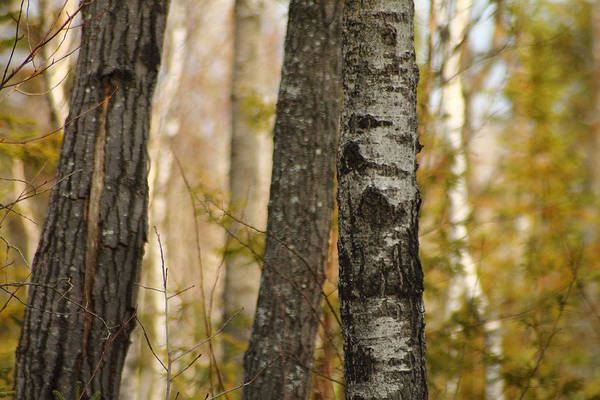 Photograph - Northern Michigan Forest by Scott Hovind