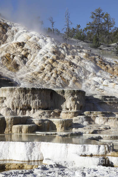 Yellowstone Caldera Photograph - Palette Spring And Travertine Sinter by Richard Roscoe