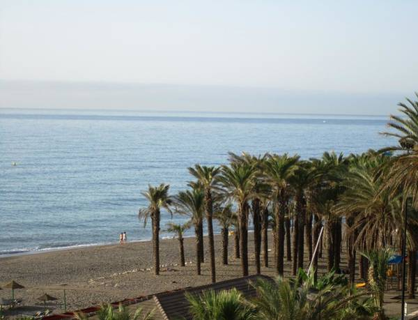 Photograph - Palm Trees At Costa Del Sol Beach Spain by John Shiron