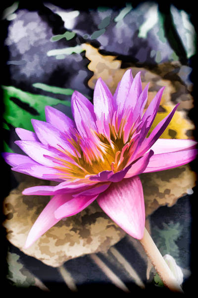 Photograph - Pastel Lily by Ray Shiu