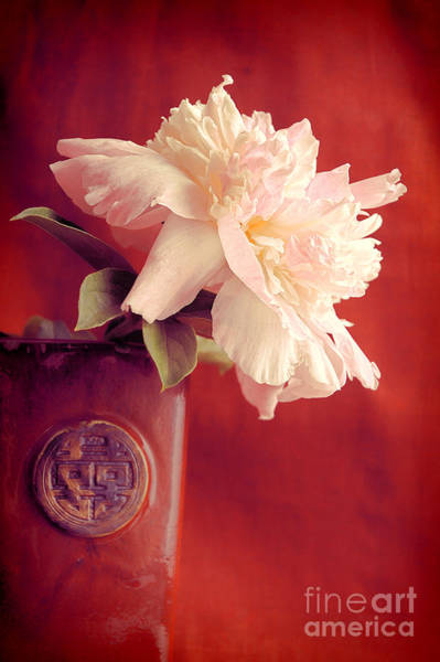 Flores Photograph - Peony by HD Connelly