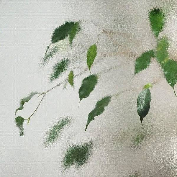 View Photograph - Plant Behind Glass by Matthias Hauser