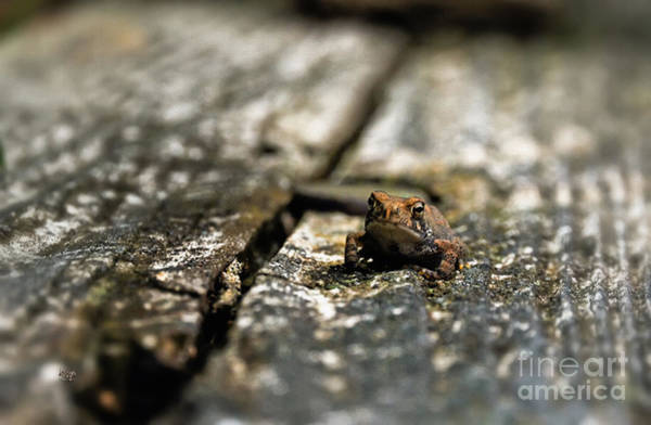Wall Art - Photograph - Please Watch Your Step by Lois Bryan
