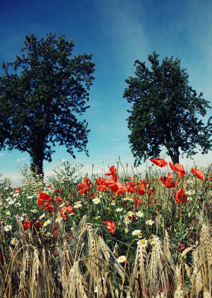 Wall Art - Photograph - Poppies by Falko Follert