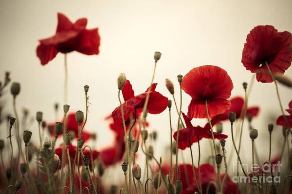 Wall Art - Photograph - Poppy Flowers 03 by Nailia Schwarz
