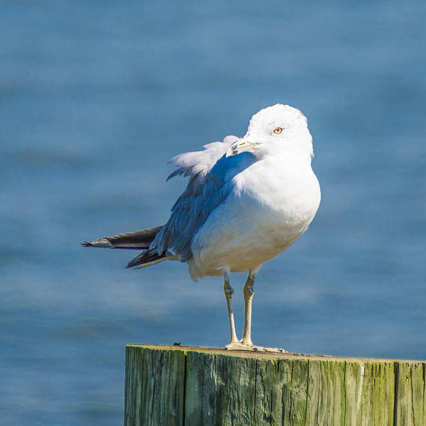 Photograph - Pretty Birdie by Theodore Jones