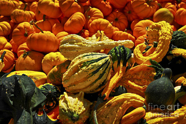Wall Art - Photograph - Pumpkins And Gourds by Elena Elisseeva