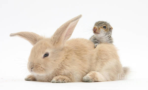 Photograph - Rabbit And Squirrel by Mark Taylor