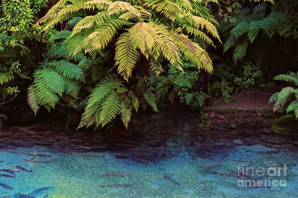 Photograph - Rainbow Springs by Mark Dodd