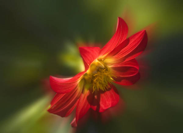 Photograph - Red Flower by Cliff Norton