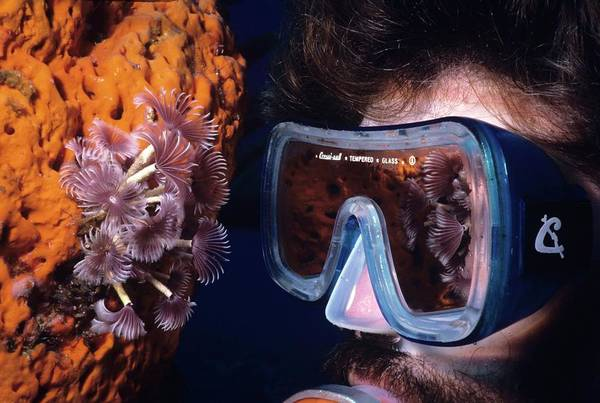 Photograph - Reef Reflections by Don Kreuter
