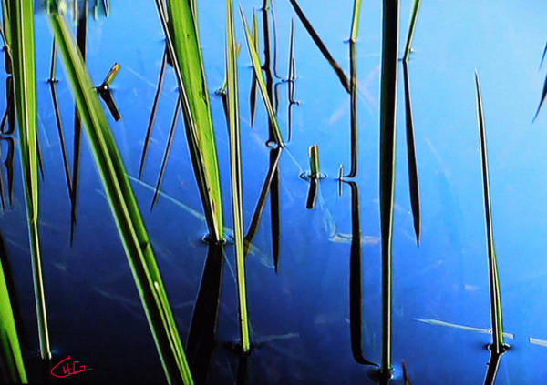 Photograph - Reflections In Water by Colette V Hera  Guggenheim