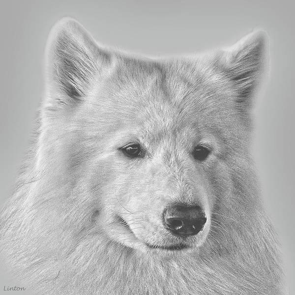 Digital Art - Samoyed by Larry Linton