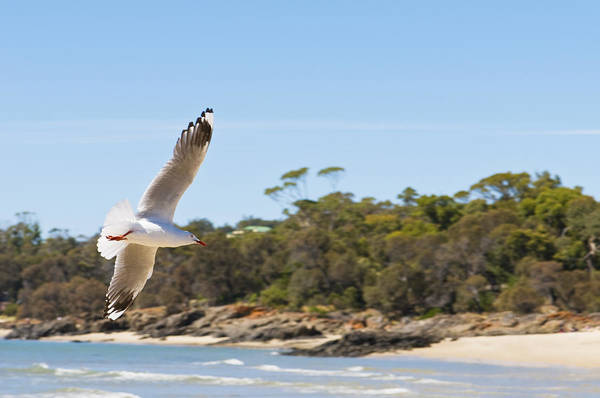 Photograph - Seagull Spreads Its Wings On The Beach by U Schade