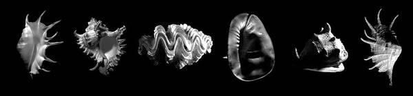Photograph - Seashells by Frank Wilson