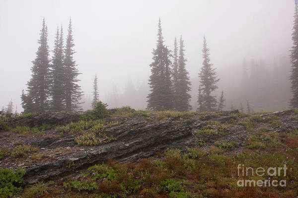 Photograph - Shrouded by Katie LaSalle-Lowery