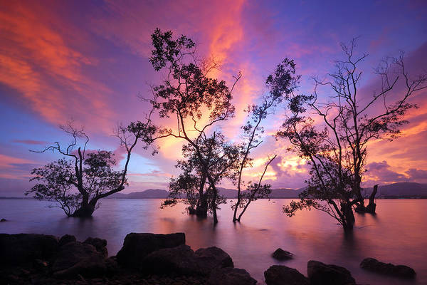 Wall Art - Photograph - Silhouette Of Trees by Teerapat Pattanasoponpong
