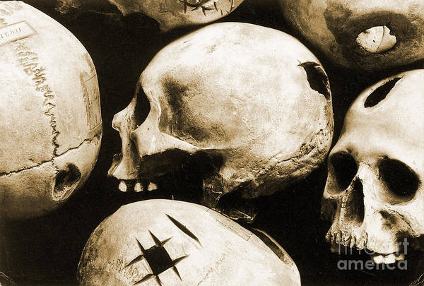 Photograph - Skulls Showing Trepanation by Science Source