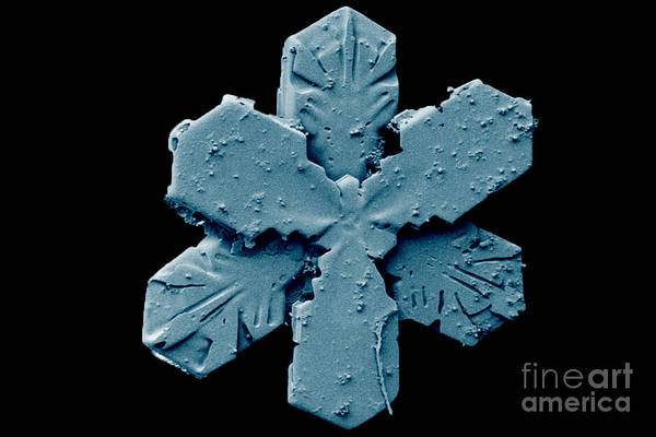 Photograph - Snow Crystal by Electron and Confocal Microscopy Laboratory-Agricultural Research Service-US Dept of Agriculture