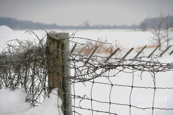 Fence Post Photograph - Snow Fence  by Sandra Cunningham