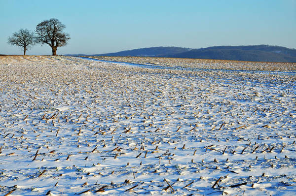 Horizontal Landscape Photograph - Snowy Fields In Winter by Sami Sarkis