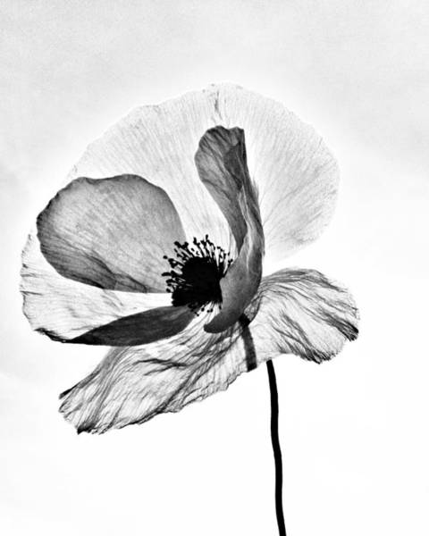Photograph - Standing Alone by Marianna Mills
