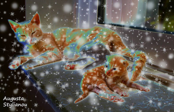 Photograph - Starry Cat And Kitten by Augusta Stylianou