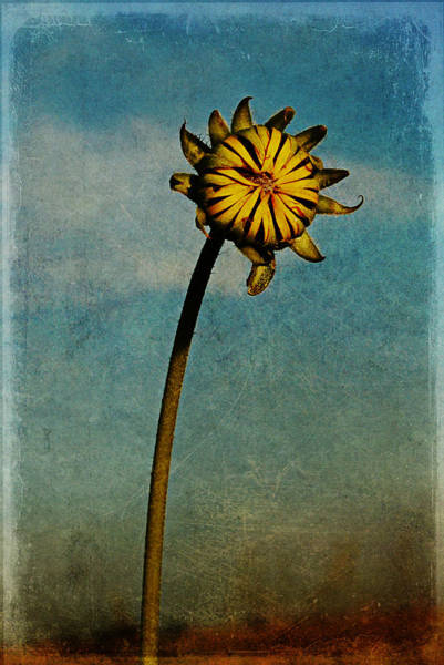 Digital Art - Sunflower by Melany Sarafis