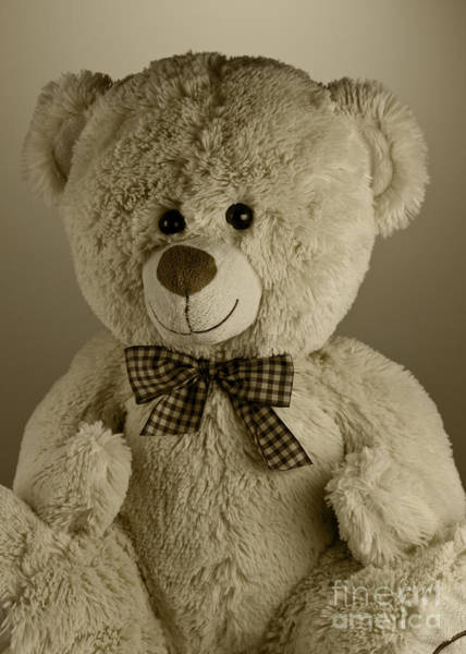 Wall Art - Photograph - Teddy Bear by Blink Images