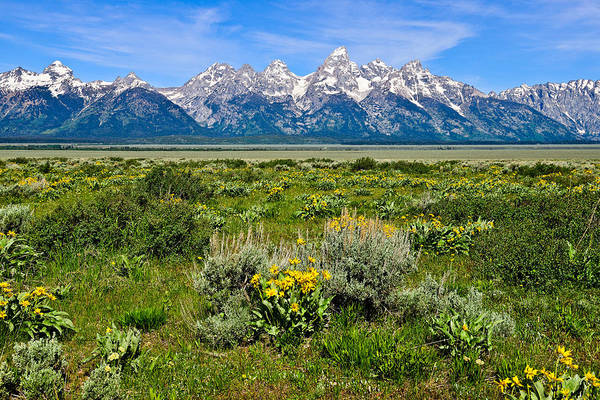 Photograph - Teton Peaks And Flowers by Greg Norrell