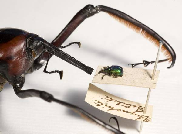 Scaling Photograph - The Lesser Of Two Weevils by Paul D Stewart