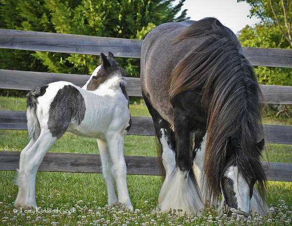 Photograph - The New Colt by Terry Kirkland Cook