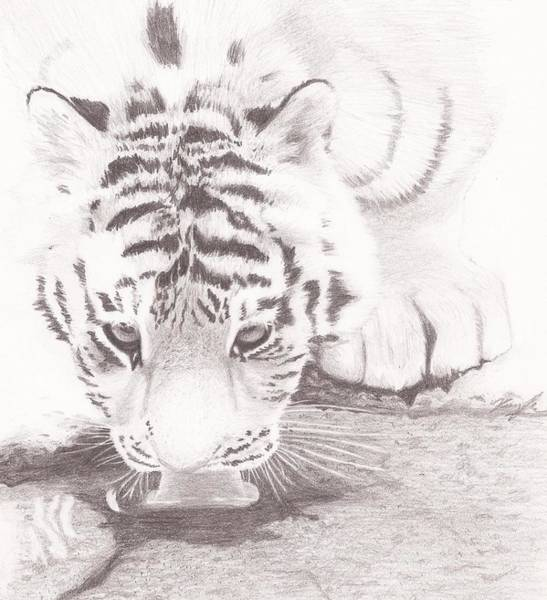 Bengal Tiger Drawing - Tiger By A Creek by Kaylee Axberg