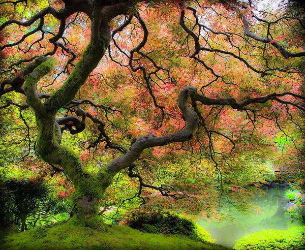 Wall Art - Photograph - Tree Of Beauty by Steve McKinzie
