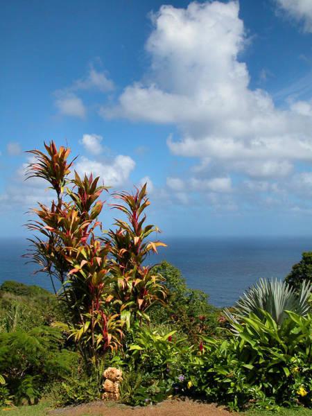 Photograph - Tropical Paradise by Lynn Bauer