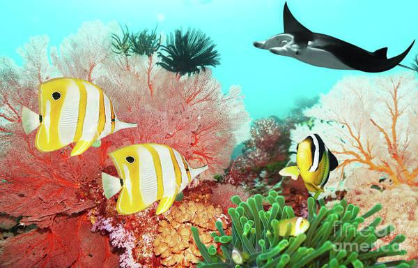Wall Art - Photograph - Underwater World by MotHaiBaPhoto Prints