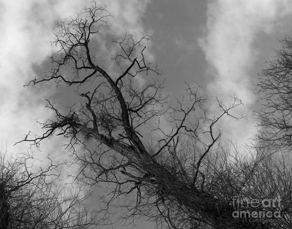 Photograph - Up Tree by Donna Cavanaugh