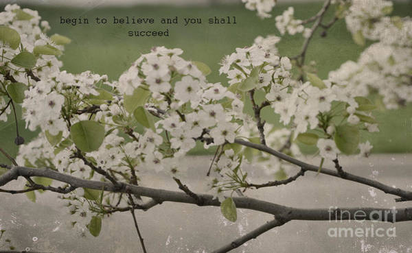 Photograph - Vintage Spring by Traci Cottingham