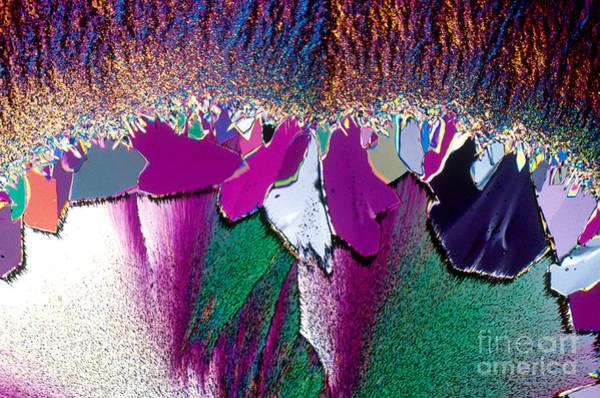Photograph - Vitamin B1 Crystal by Michael W Davidson
