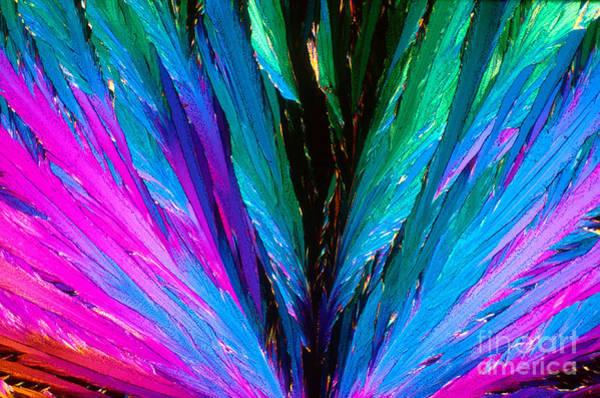 Photograph - Vitamin B6 Crystal by Michael W Davidson