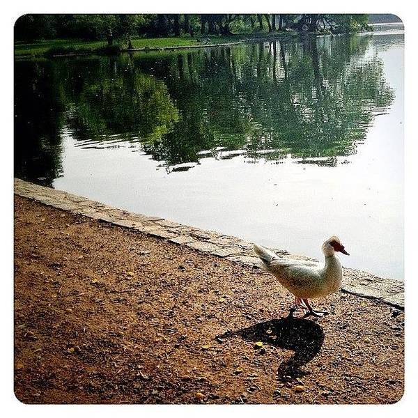 Bird Photograph - Waddle By The Water by Natasha Marco