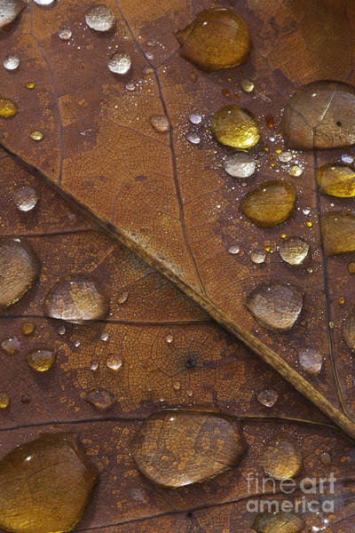 Photograph - Waterdrops Iv by David Waldrop