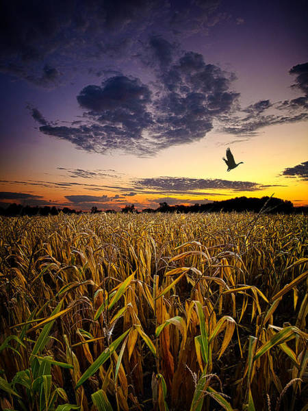 Migrate Photograph - Way Stop by Phil Koch