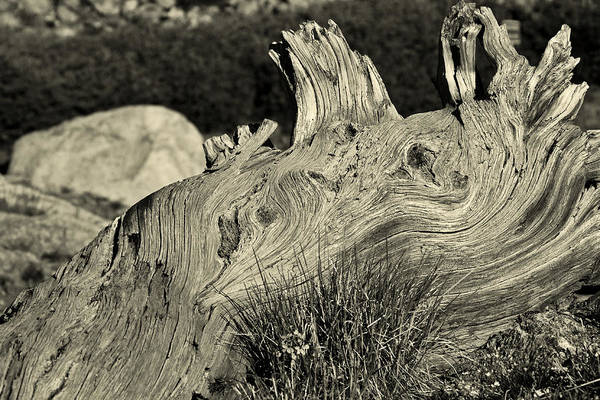 Photograph - Weathered by Colleen Coccia