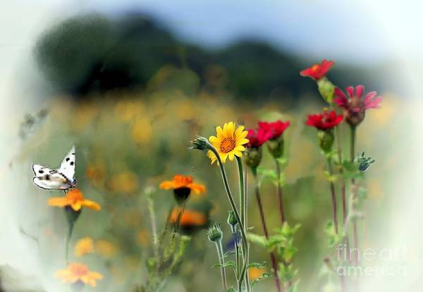 Photograph - White Butterfly  by John  Kolenberg