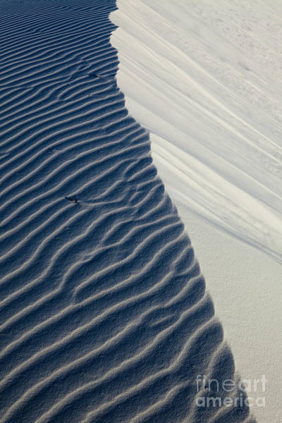 Yucca Plants Photograph - White Sands by Keith Kapple