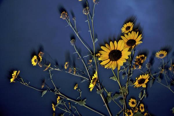 Tallgrass Wall Art - Photograph - Wildflowers Blooming On The Kansas by Jim Richardson