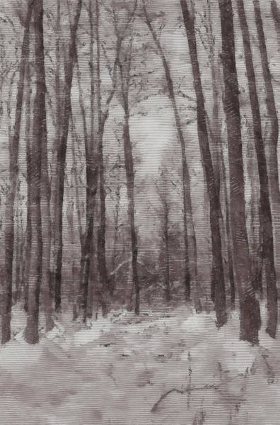 Photograph - Winter Forest by Michael Goyberg